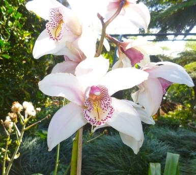 madeira-orchids