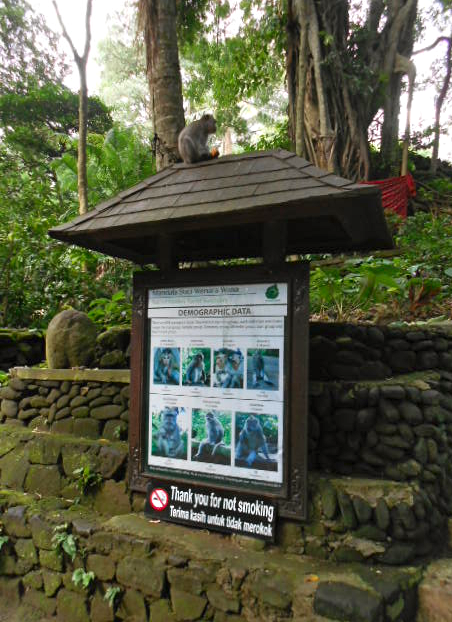 monkey forest 3